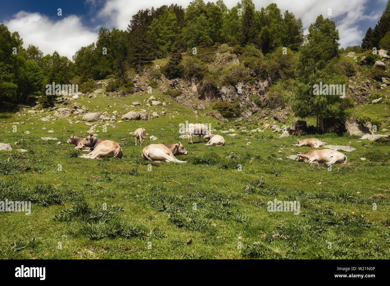 The beautiful Aiguestortes i Estany de Sant Maurici National Park of the Spanish Pyrenees mountain in Catalonia - Stock Image