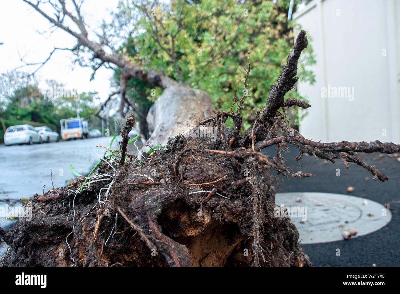 Grainy Roots - Stock Image