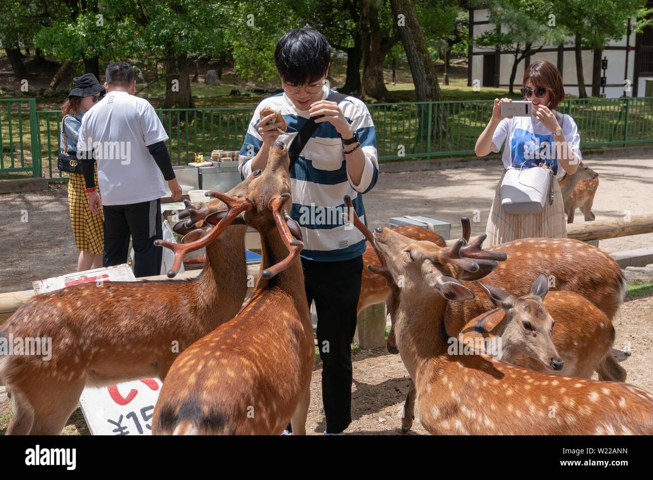 Deer roaming in the streets of Nara, Japan - Stock Image