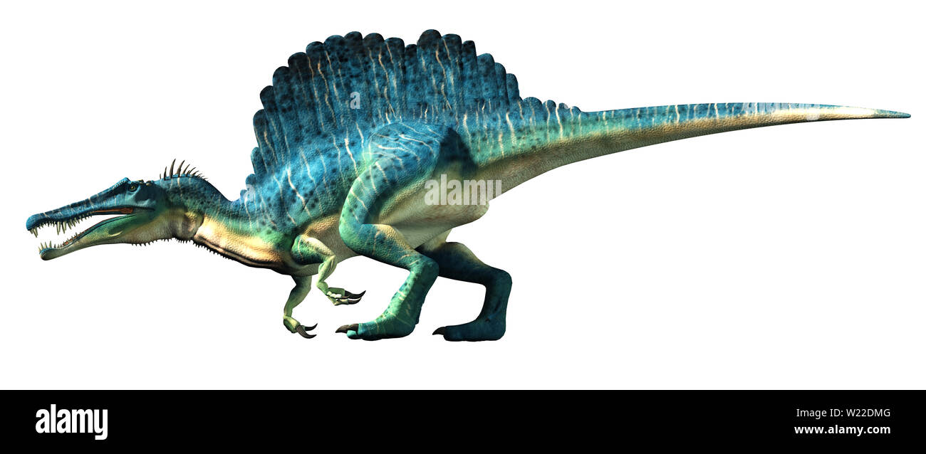 A spinosaurus on a white background. Spinosaurus was semi-aquatic dinosaur from the Cretaceous period. It was one of the largest carnivorous dinos. - Stock Image