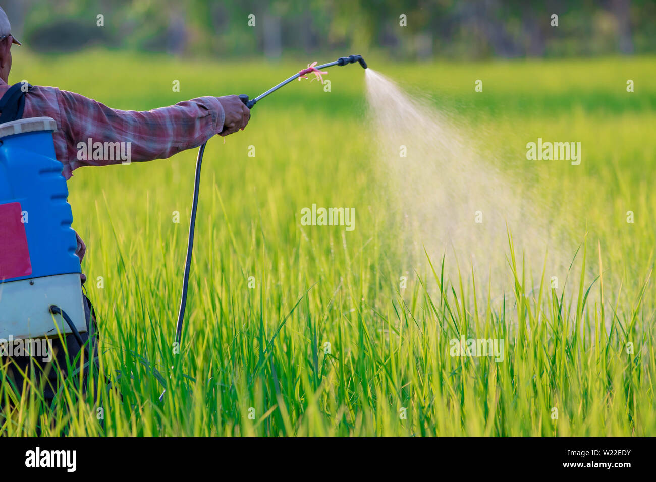 spraying pesticide - Stock Image