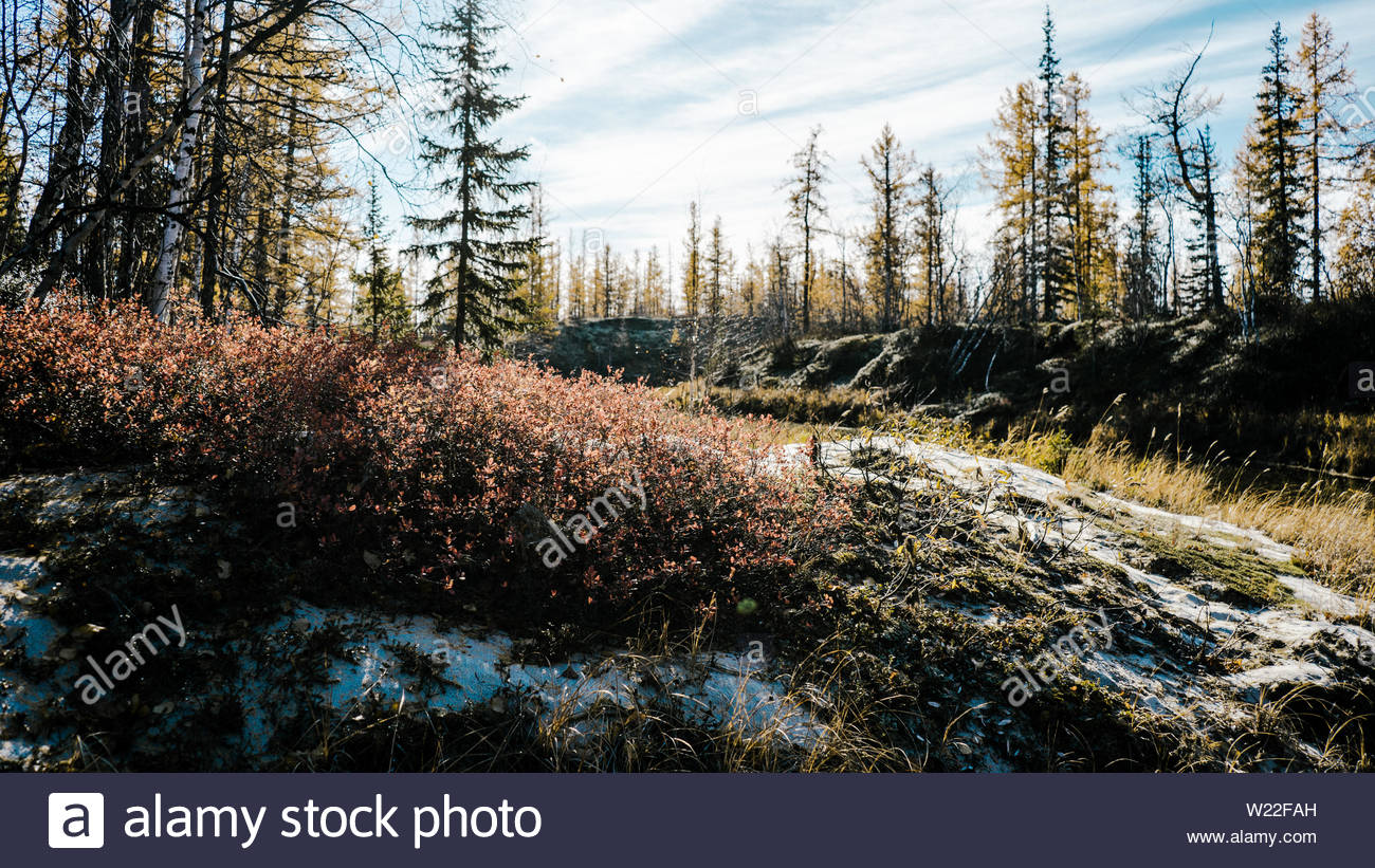 Bushes and trees are dusted with a light snow. Stock Photo