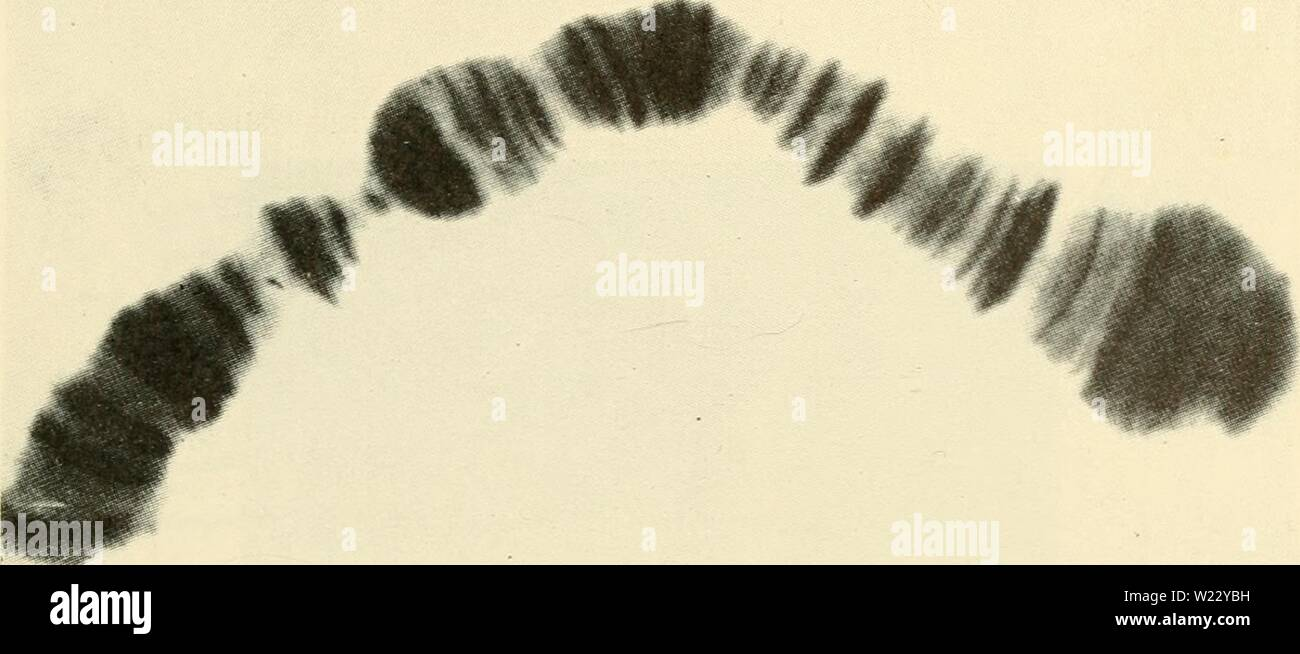 Archive image from page 118 of Cytology (1961) Stock Photo