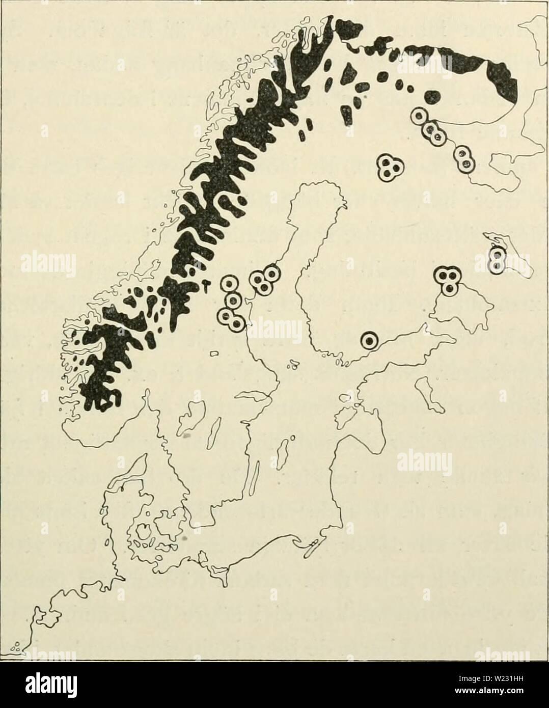 Archive image from page 124 of Den norrländska florans  geografiska. Den norrländska florans : geografiska fördelning och invandringshistoria ; med särskild hänsyn till dess sydskandinaviskar arter  dennorrlndskaf00ande Year: 1912  SYDBERGENS FLORA OCH VEGETATION 107 Vissa undantag torde dock finnas. En del mycket sällsynta arter kunna naturligen från rent växtgeografisk synpunkt betecknas som relikter, äfven om de icke äro det fi-än ekologisk. Ett exempel härpå är Potentilla nivca, som BlRGER funnit i yppig utbildning i Medskogsberget i Härje- dalen inom barrskogsregionen åtminstone något hun Stock Photo