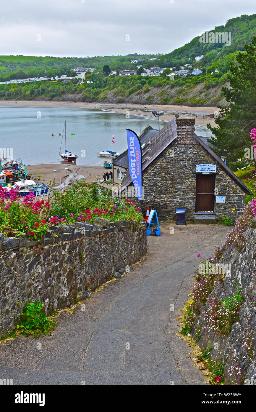View of fishing boats moored in Newquay harbour.Families playing on the beach.Cardigan Bay Marine Wildlife Centre building behind pretty pink flowers. - Stock Image