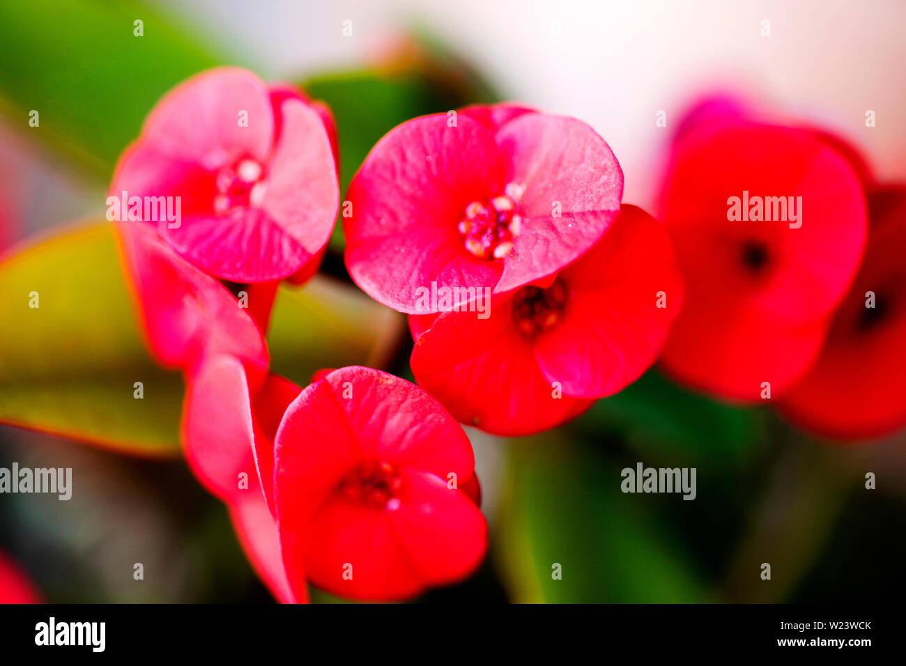 Red Flower Photography Wallpaper
