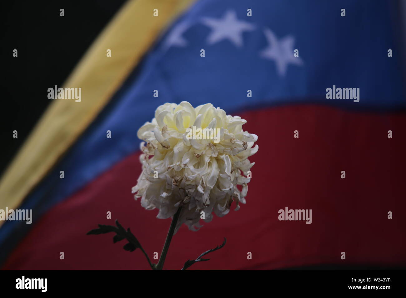 Caracas, Venezuela. 05th July, 2019. A withered flower is held high in front of the flag of Venezuela during a protest against the government on Independence Day. The opposition leader and self-appointed interim president Guaido had called on civil society to protest against the government of head of state Maduro. Venezuela commemorates on July 5 the independence of Spain in 1811. Credit: Rafael Hernandez/dpa/Alamy Live News - Stock Image