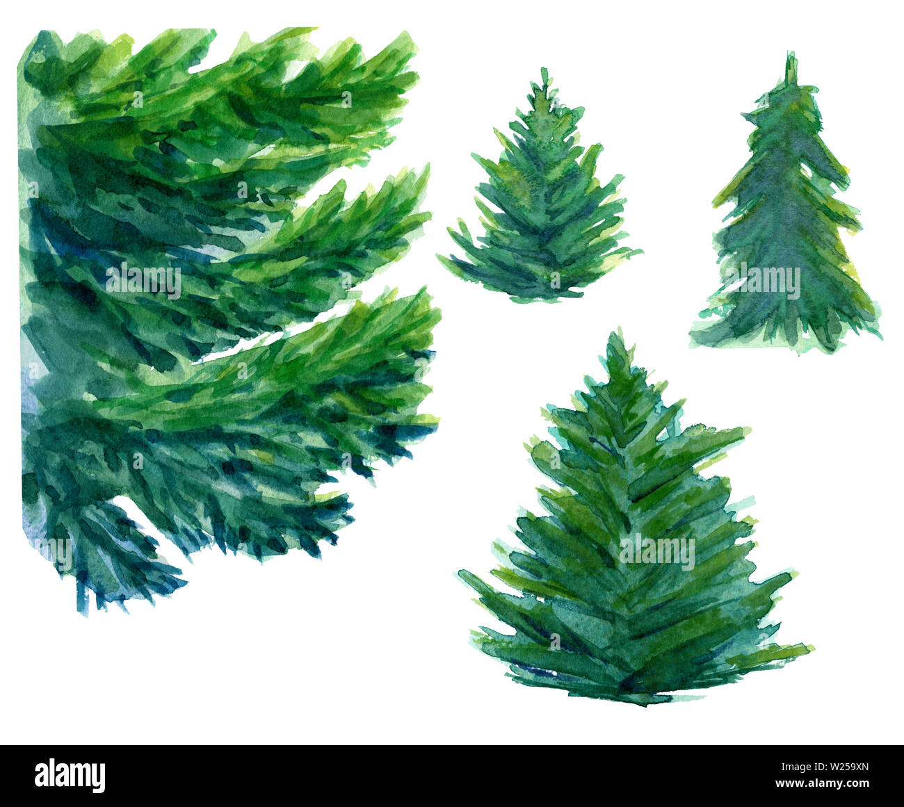 Watercolor hand drawn three green fir trees and one big element of spruce branch. Design for winter background, wrapping paper, packaging. Winter them - Stock Image