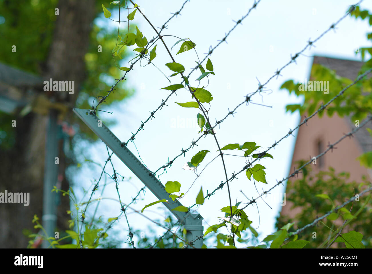 Overgrown barbed wire fence with blurry building in background - Stock Image