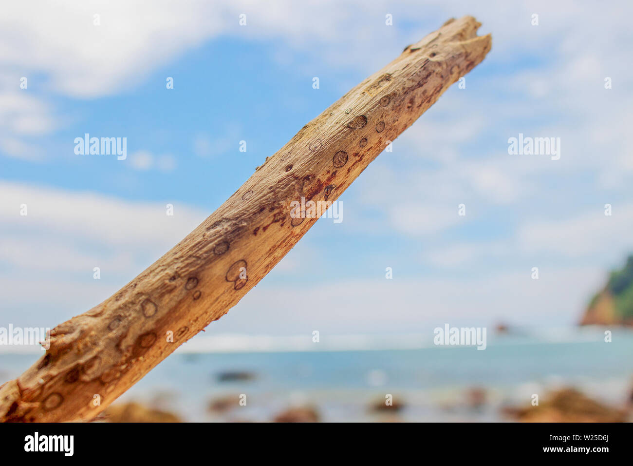 A Piece of Wood on Beach Stock Photo