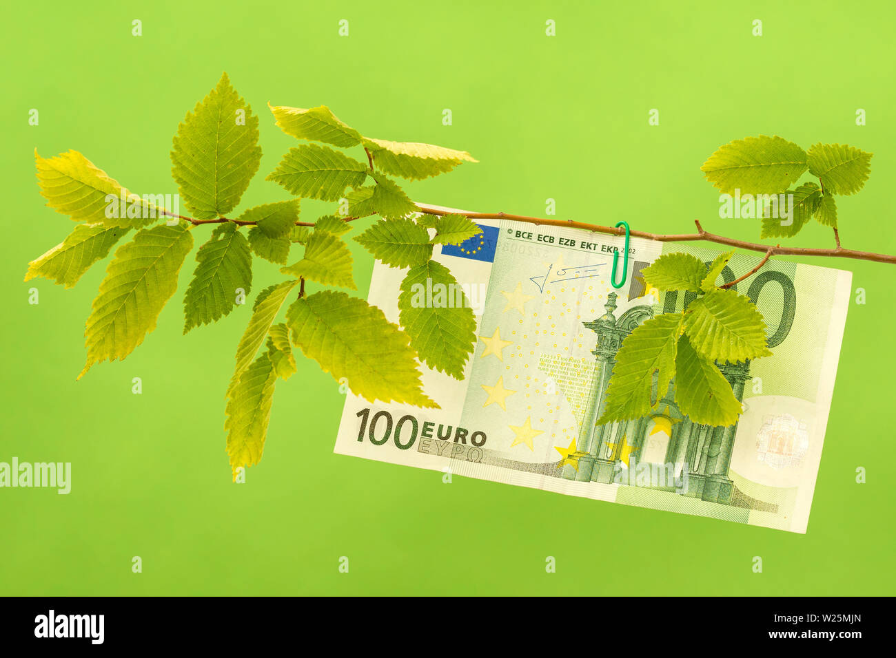 One Hundred Euro hanging on the tree branch. Money tree, revenue growth. - Stock Image