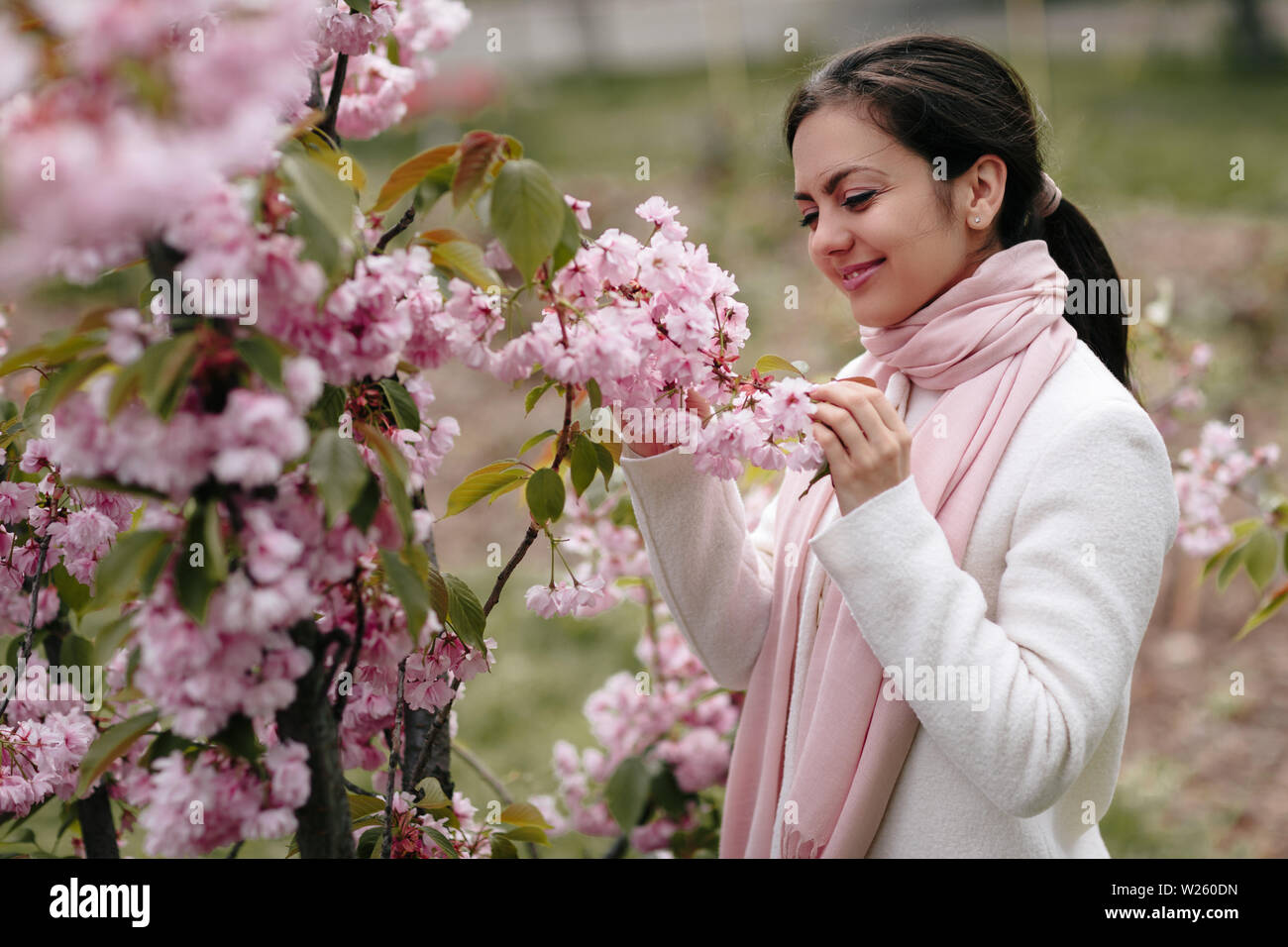 Japanese Woman And Cherry Blossom Stock Photos Japanese