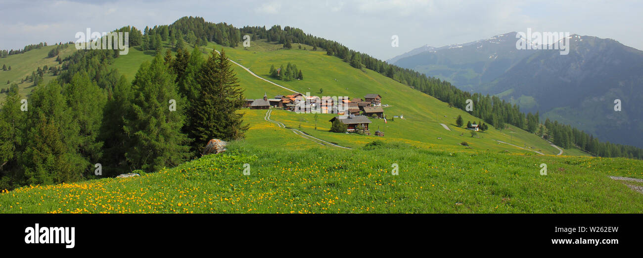 Obermutten, village situated on a hill top. Green Meadow with yellow Flowers. - Stock Image