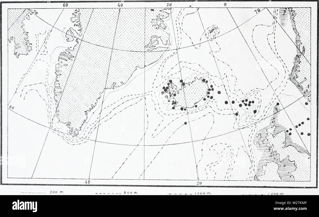 Archive image from page 289 of The Danish Ingolf-expedition (1899-1953). The Danish Ingolf-expedition  danishingolfex5bpt5a8daniuoft Year: 1899-1953  138 HYDROIDA II Hydrallmaniafalcata has its chief occurrence in the littoral region of the boreal seas, and may exceptionally penetrate deeper down into the abyssal, where it has, however, once or twice been ob- served at 2000 metres depth. The species can move right up into arctic waters, and has even been met with in the Kara Sea; otherwise, its occurrence coincides with the presence of warmer currents in the high arctic areas. It may also pene Stock Photo