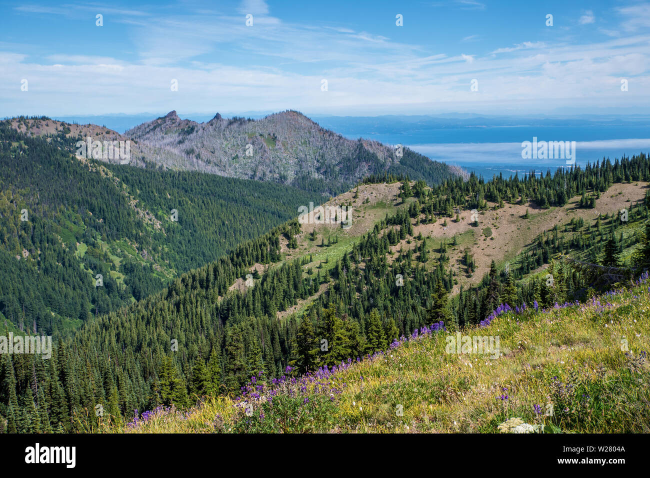 Hurricane Ridge, Olympic National Park, Washington, USA.  View of mountains with lupine wildflowers and Pacific Ocean from a hiking trail. - Stock Image