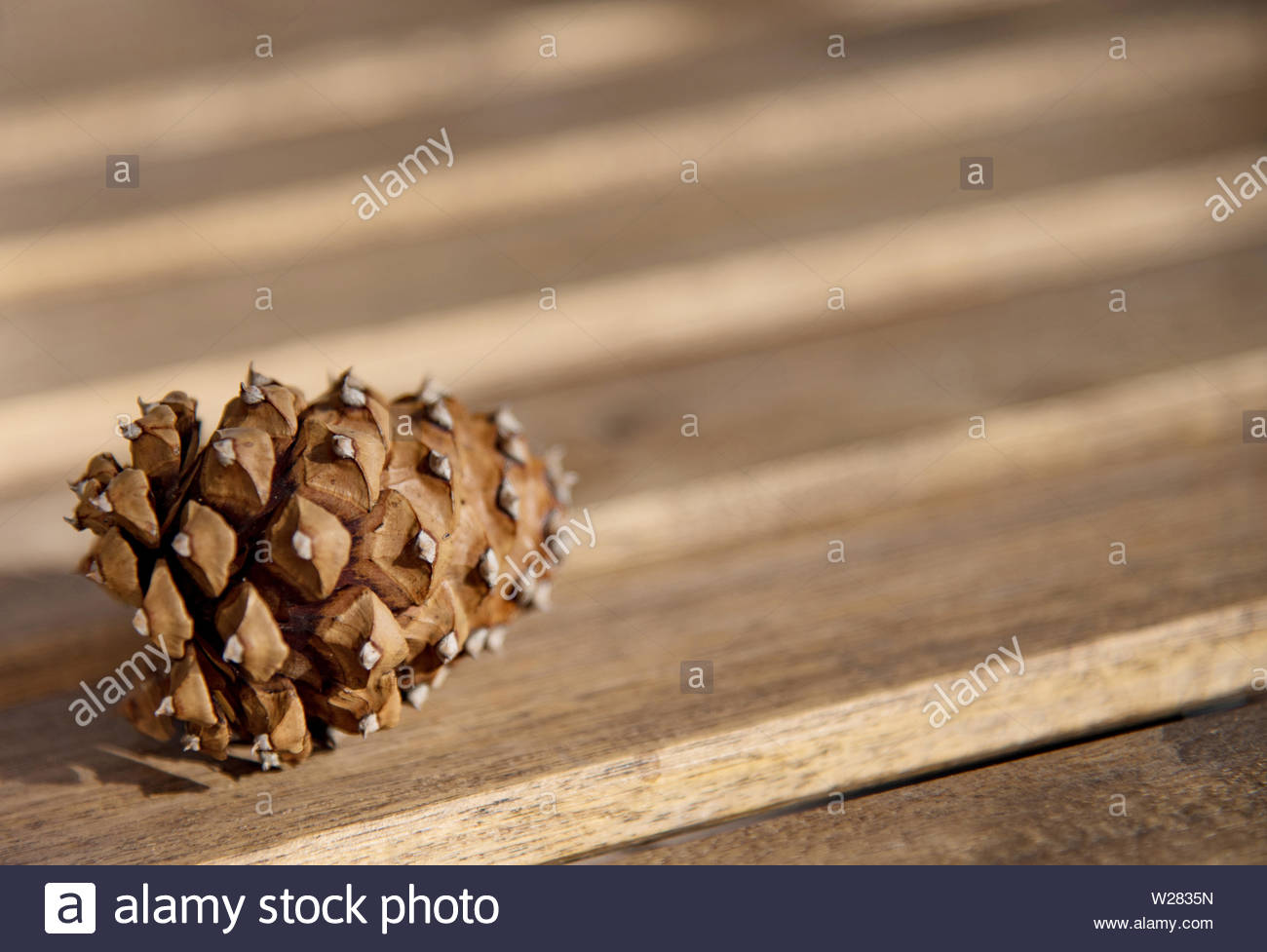 Pine cone on a slatted table - Stock Image