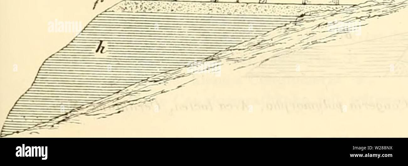Archive image from page 386 of Denkschriften der Kaiserlichen Akademie der. Denkschriften der Kaiserlichen Akademie der Wissenschaften, Mathematisch-Naturwissenschaftliche Classe  denkschriftender37kais Year: 1877  rjQjJJZZ    Von diesen Unregelmässigkeiten abgesehen, stellt sich die Sehichtenfolge von oben nach unten folgen- dermassen dar: a) Harte Bänke von tuffigem Kalkstein mit transversaler Schichtung ohne Fossilien. (Entspricht wahr- scheinlich dem Kalksandstein von Korinth mit Landschnecken.J l>) Gelbliche Mergel mit unregelmässig eoncretionären, harten Bänken voll Steiukernen marine - Stock Image