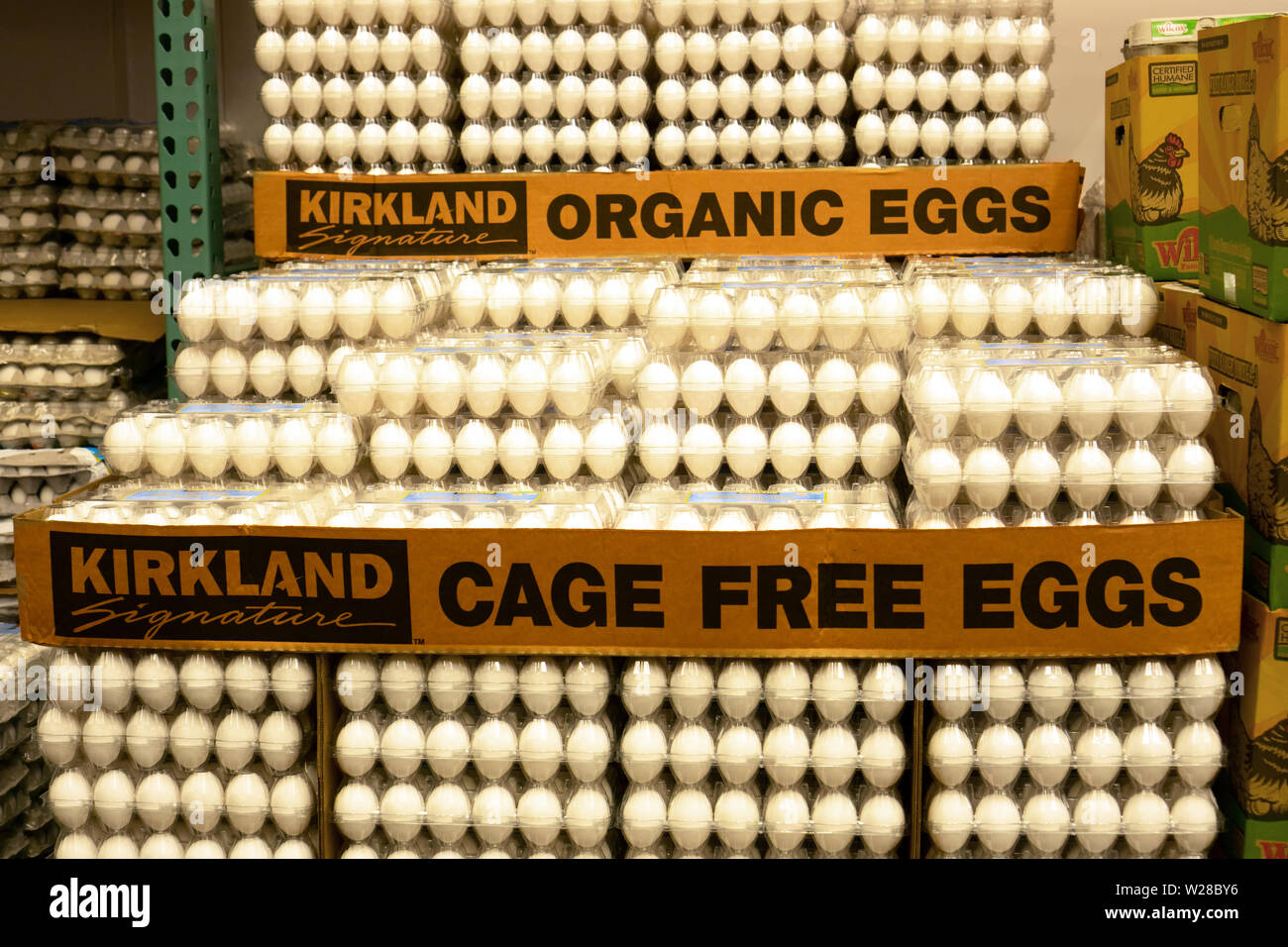Seattle WA April 16 2019. Dozens of cage free organic eggs at Costco, a large wholesale warehouse-type store. - Stock Image