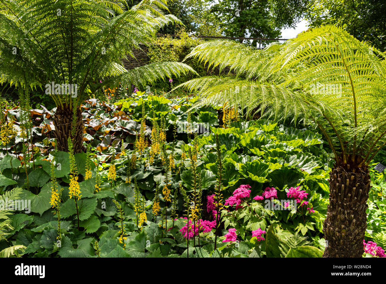 Tree ferns and flowers in the Robinson Garden RHS Hyde Hall, Essex. - Stock Image