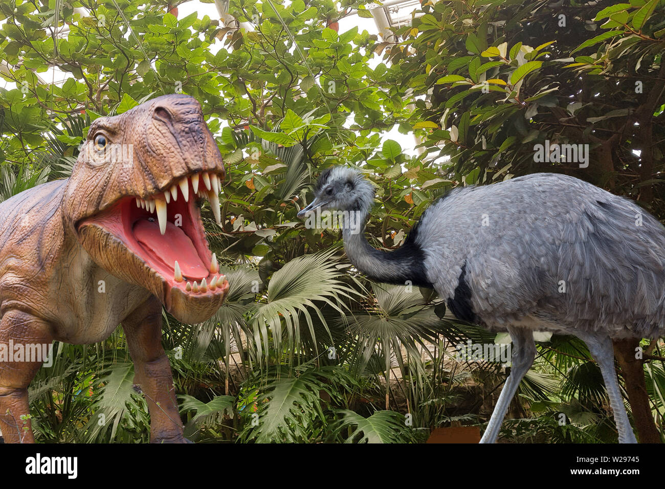 Big Black Ostrich And A Dinosaur Close Up Against The Backdrop Of A Jungle Stock Photo Alamy