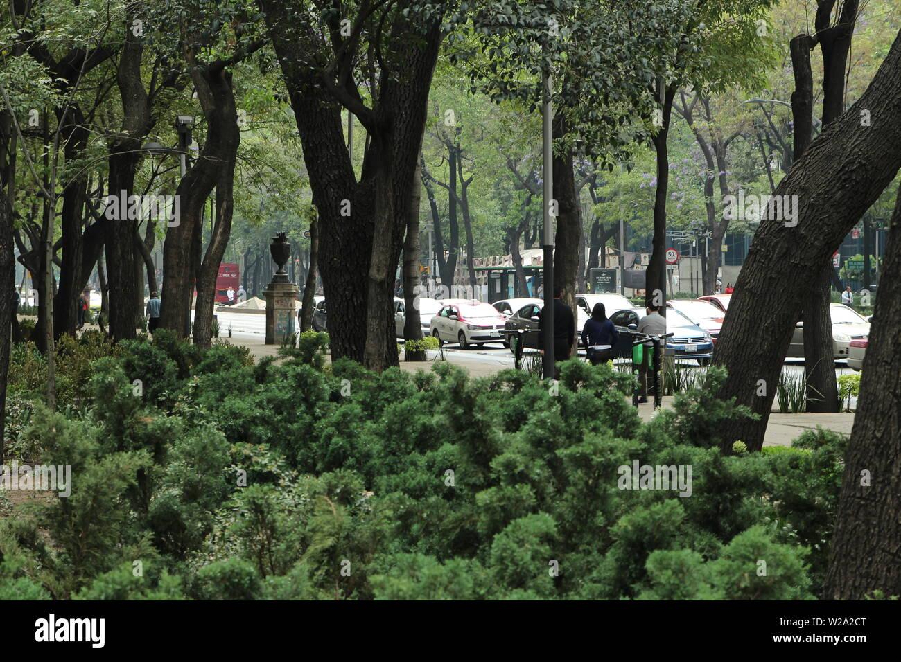 Green oasis in the Paseo de la Reforma in Mexico city. - Stock Image