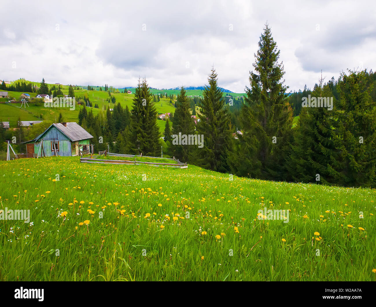 Wooden cabin near the fir forest, sunny spring day with green grass and flowering meadows in Yablunytsya, Carpathian village. - Stock Image
