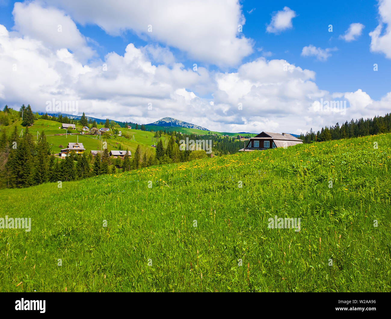 Wooden cabin near the fir forest, sunny spring day with green grass and flowering meadows in Yablunytsya, Carpathian village, Ukraine - Stock Image