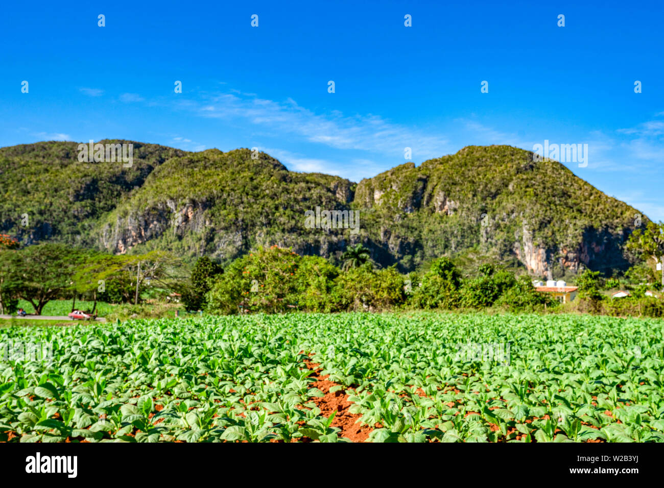 Tobacco farm in the beautiful country town of Viñales, Cuba. - Stock Image