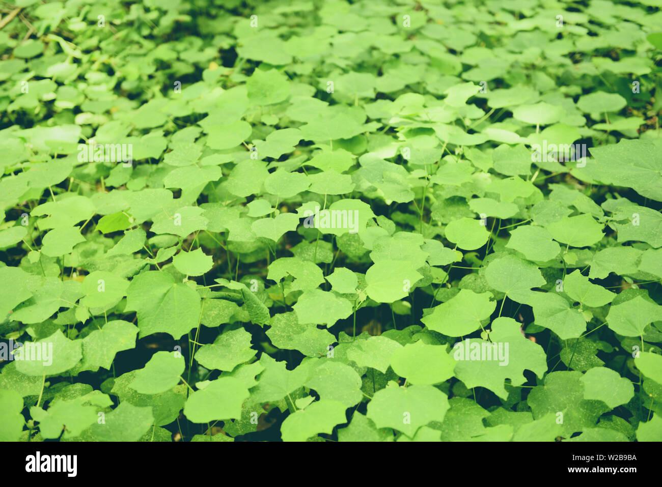 Natural Green Leaves Pattern Background Dark Leaf