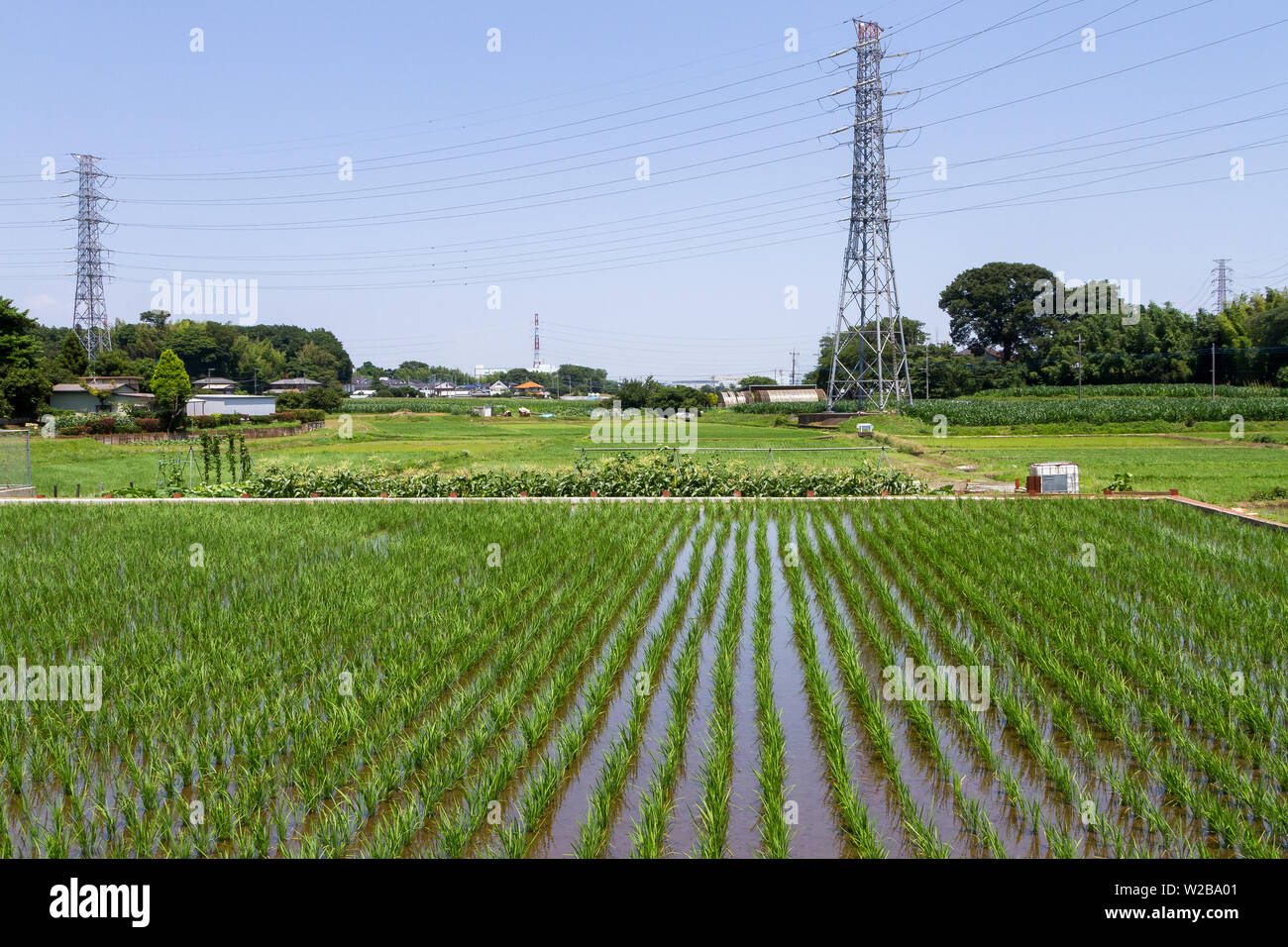 Electricity pylons over flooded rice-fields in rural Kanagawa, Japan. Monday June25th 2018 - Stock Image