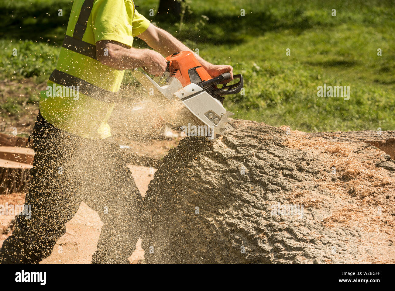 A man in full PPE using a chainsaw to cutting up a tree trunk. - Stock Image