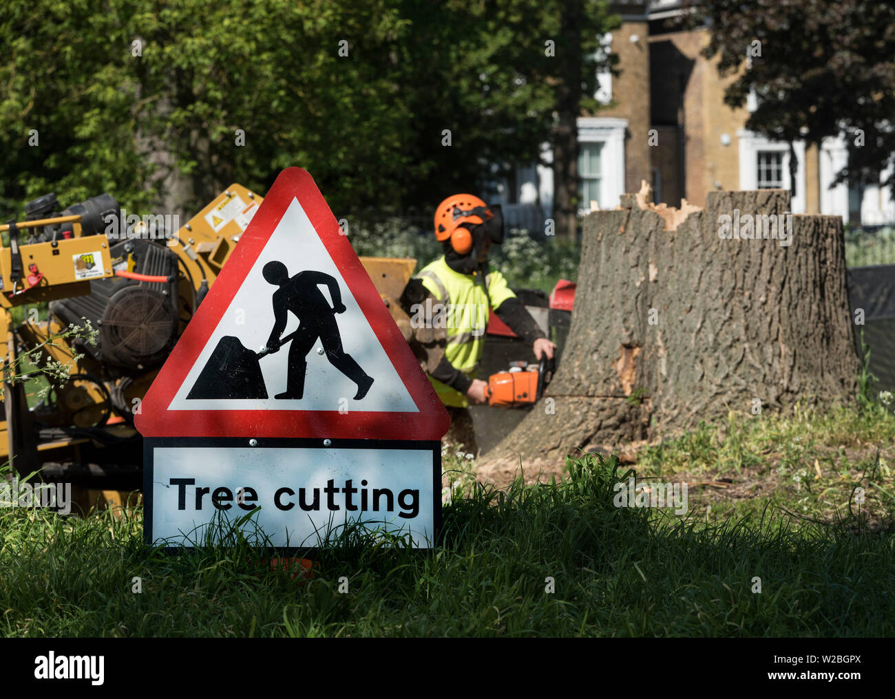 A sign warns of the hazardous area, beyond a man, in full PPE, uses a chainsaw to cut a tree stump from it's base. - Stock Image