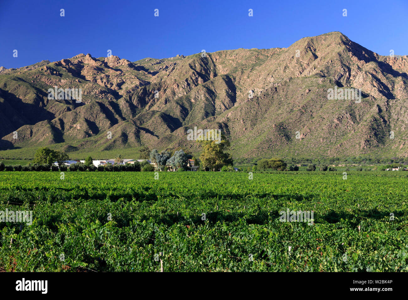 Argentina, Salta, Cafayate, Torrontes Grape Wineries - Stock Image
