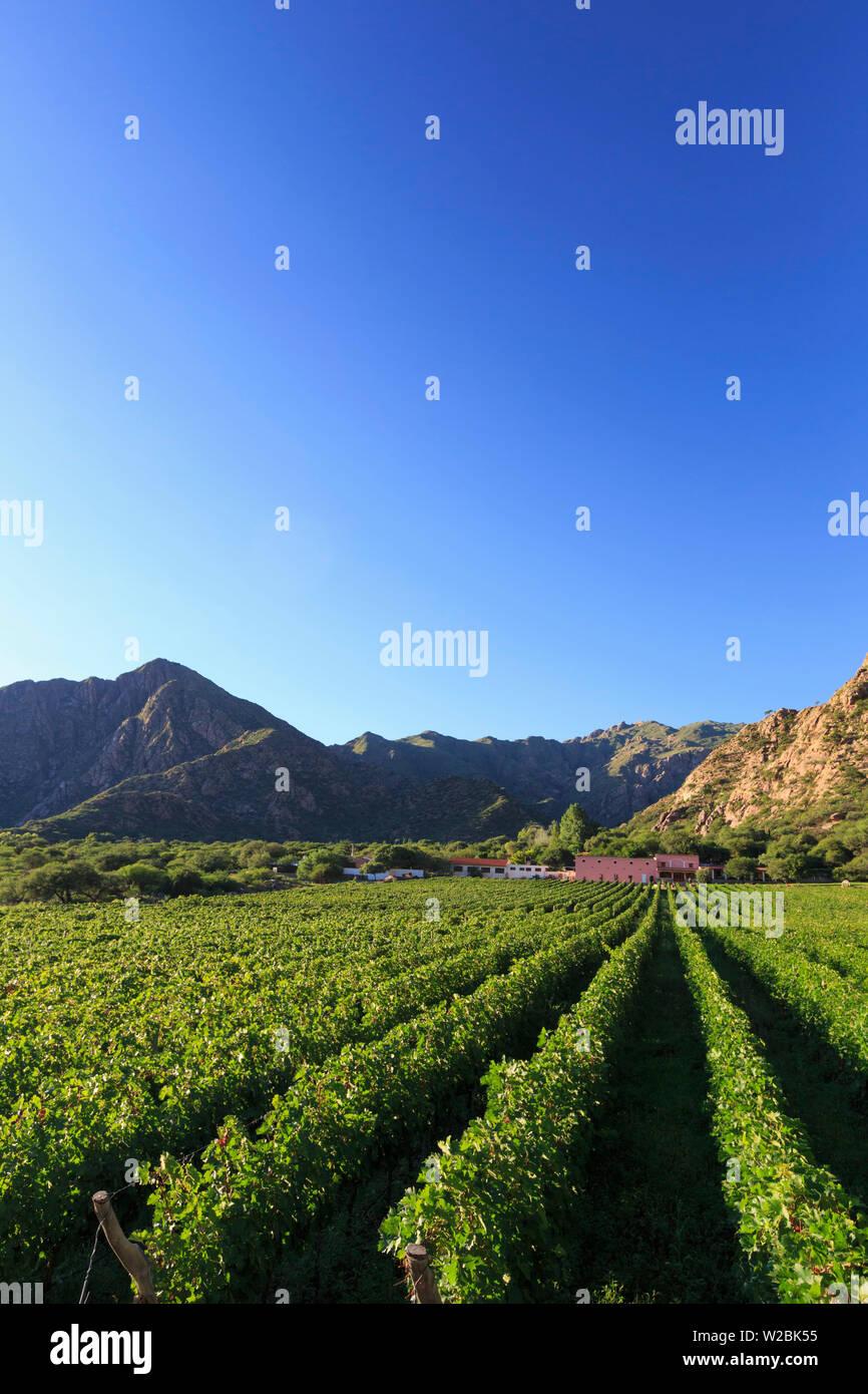 Argentina, Salta, Cafayate, Torrontes Grape Wineries at Finca de Las Nubes (Bodega Mounier) - Stock Image