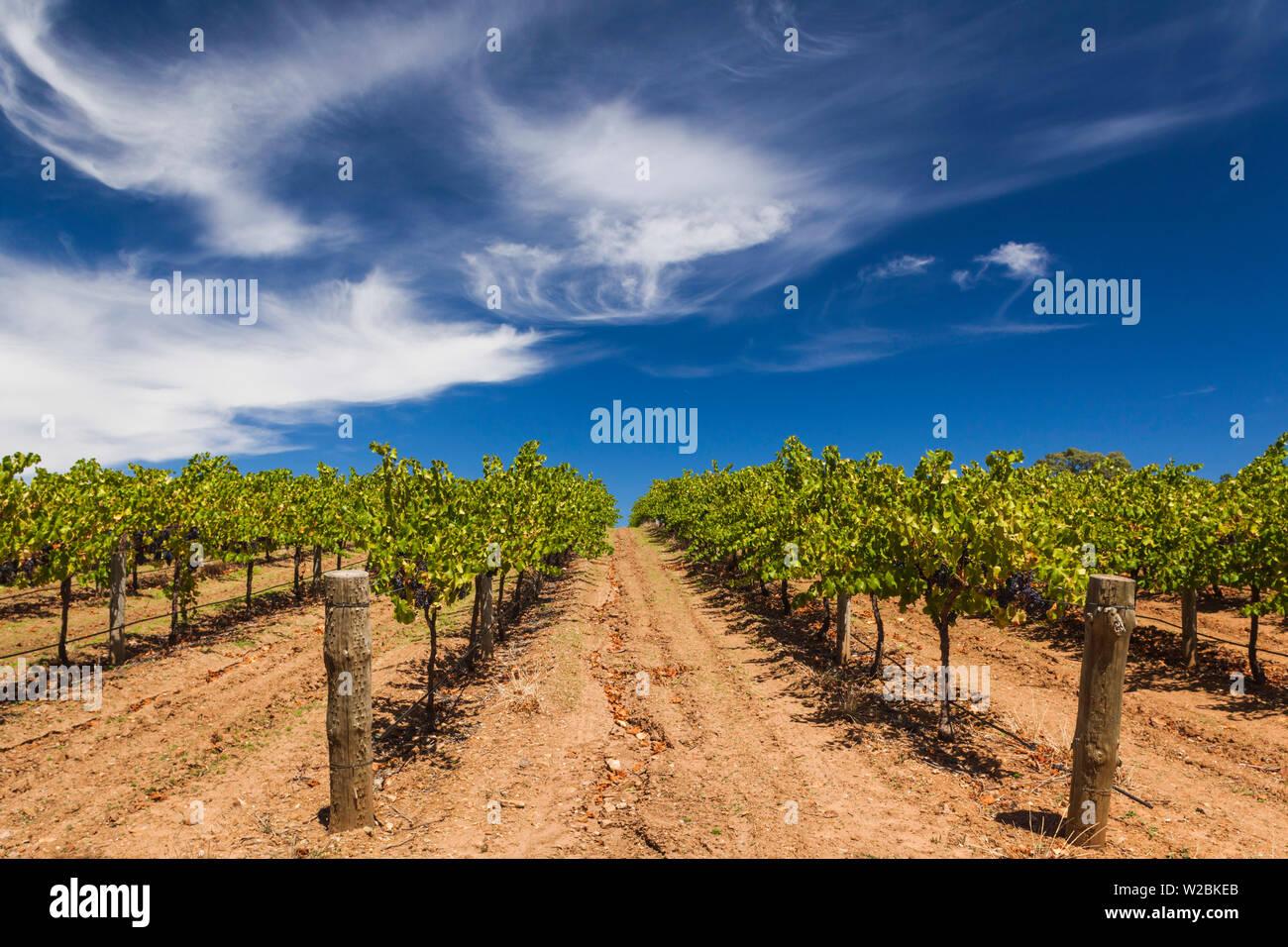 Australia, South Australia, Barossa Valley, Cockatoo Valley, vineyard Stock Photo