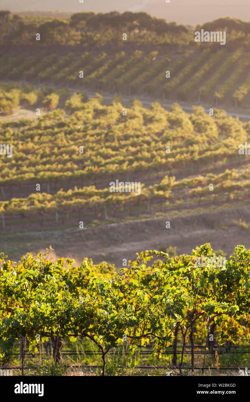 Australia, South Australia, Fleurieu Peninsula, McLaren Vale Wine Region, McLaren Vale, elevated vineyard view Stock Photo