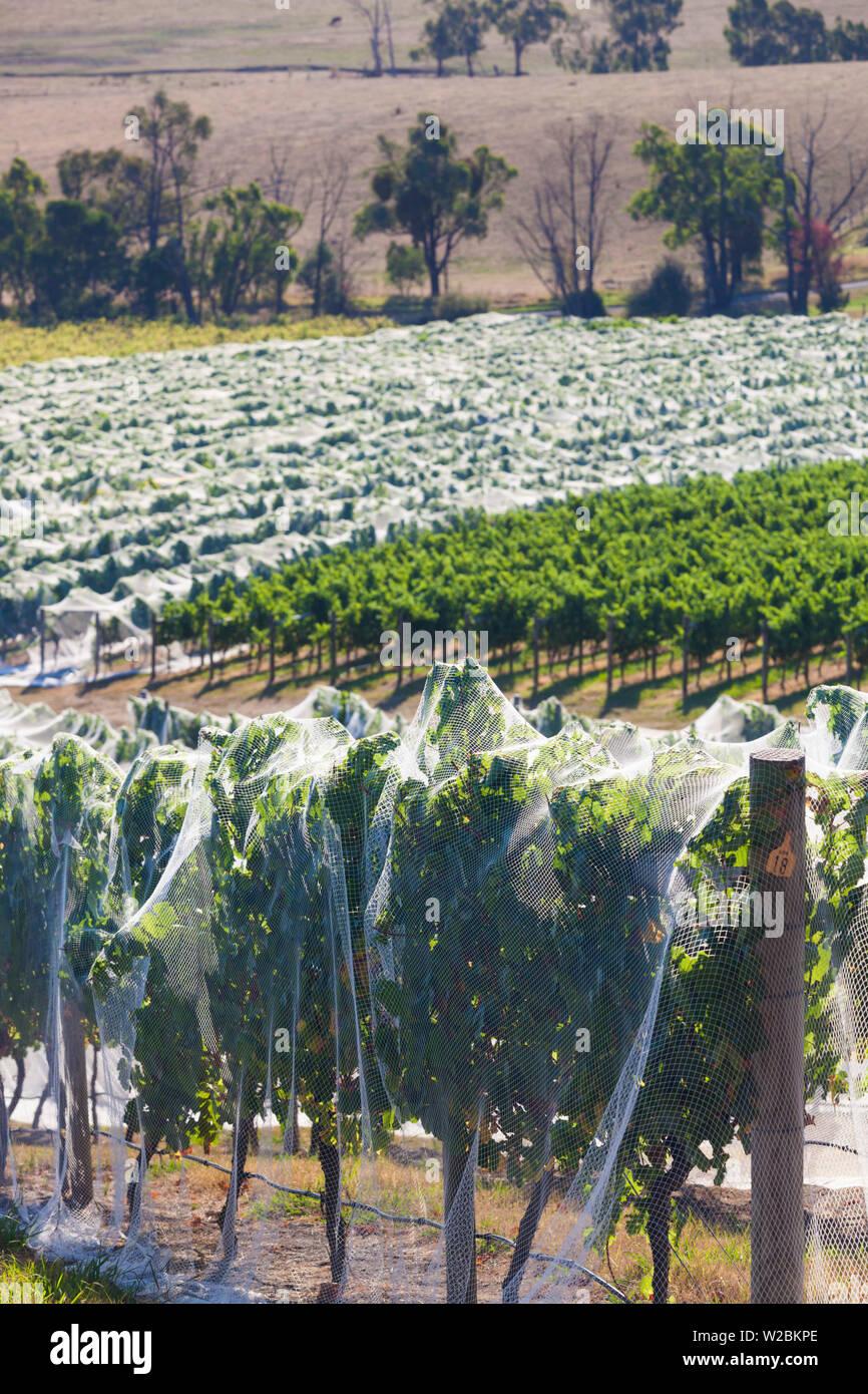 Australia, Victoria, VIC, Yarra Valley, vineyard vines under mesh fabric - Stock Image