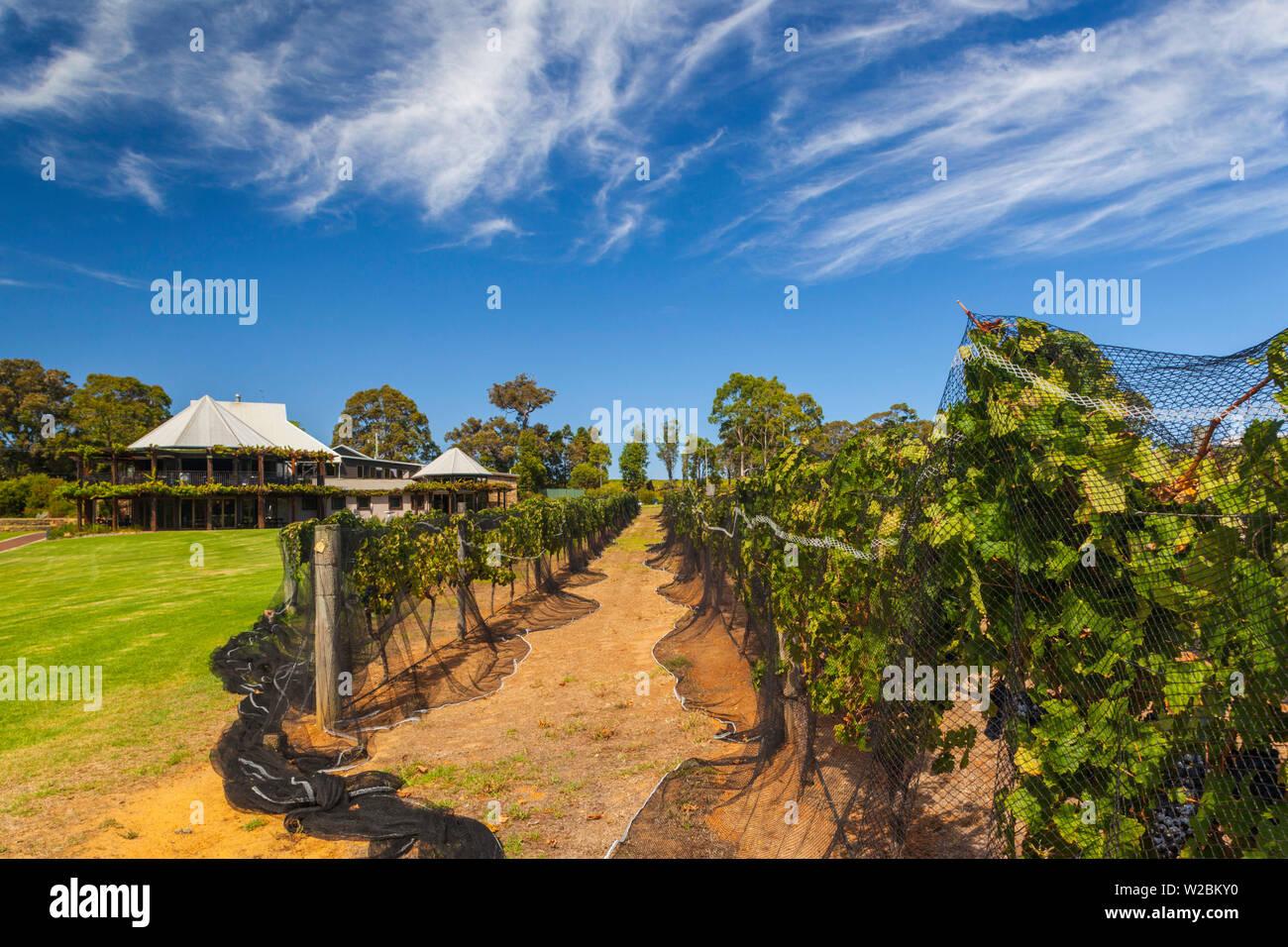 Australia, Western Australia, The Southwest, Margaret River Wine Region, Cowaramup, Vasse Felix Winery - Stock Image