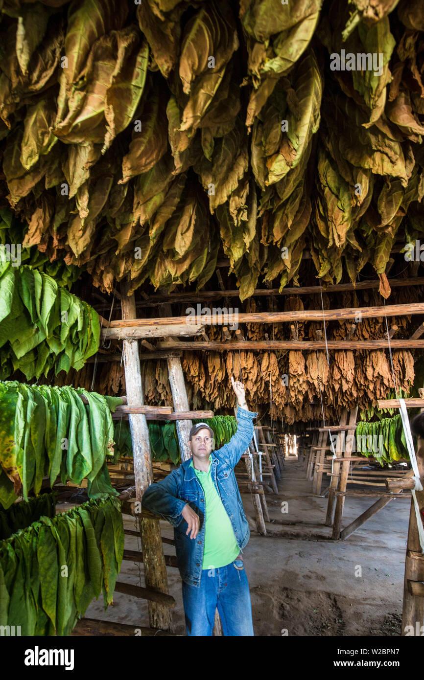 Drying house at the Alejandro Robaina Tobacco Plantation, Pinar del Rio Province, Cuba Stock Photo