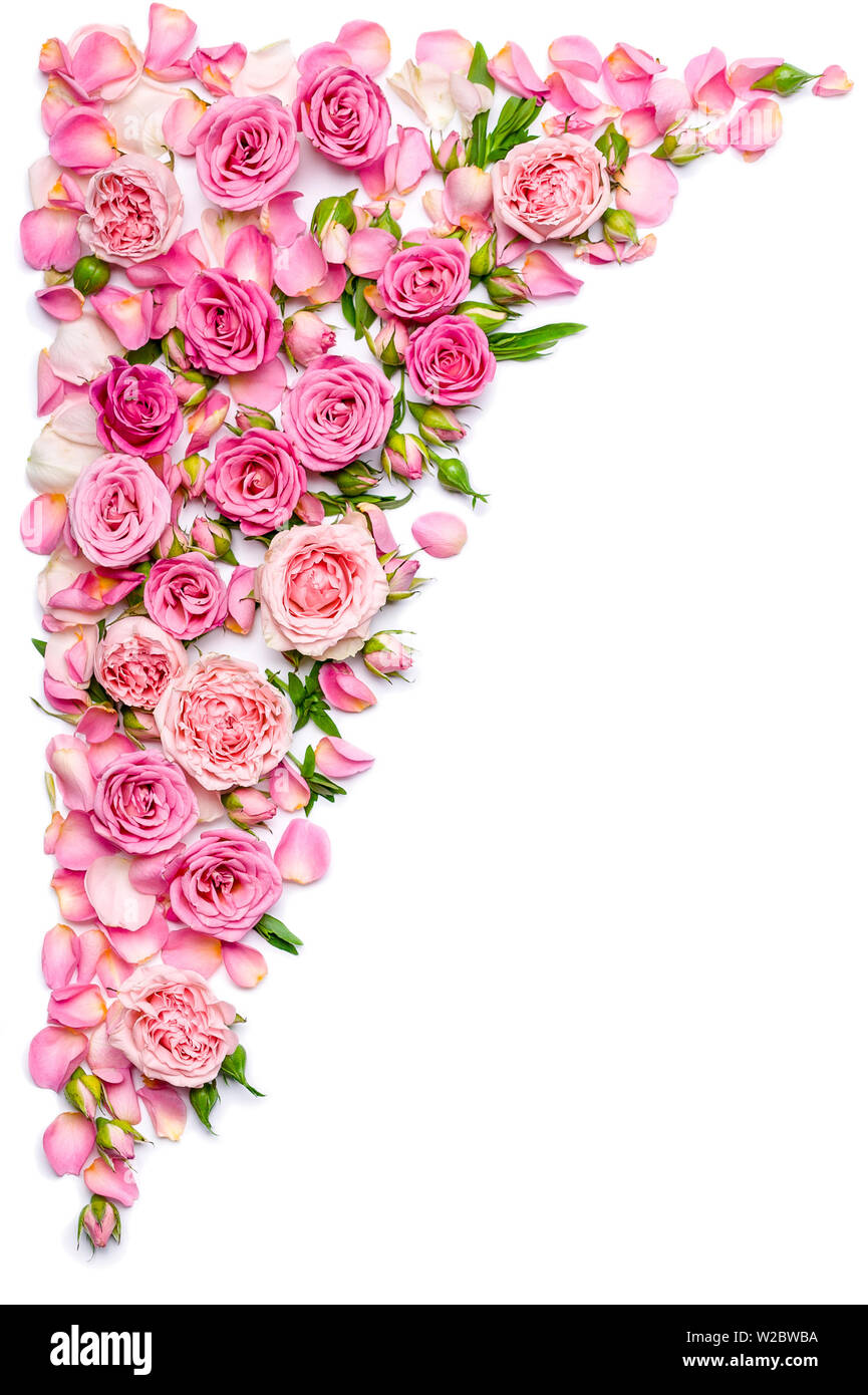 Vertical Border Of Fresh Roses On A White Background
