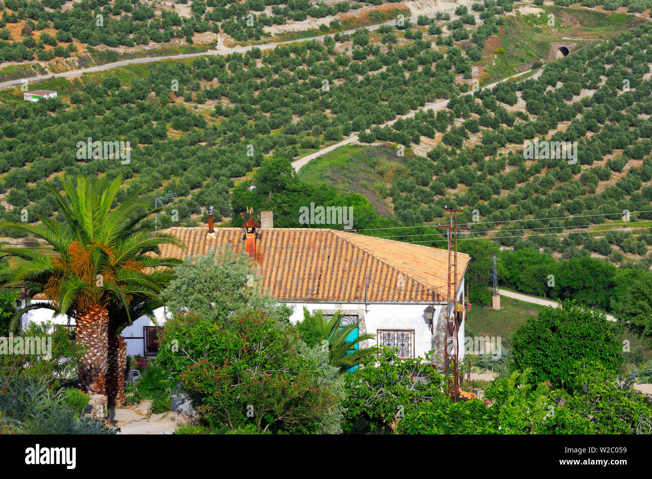 Landscape, olive groves from the Plaza Santa Lucia, Ubeda, Andalusia, Spain Stock Photo
