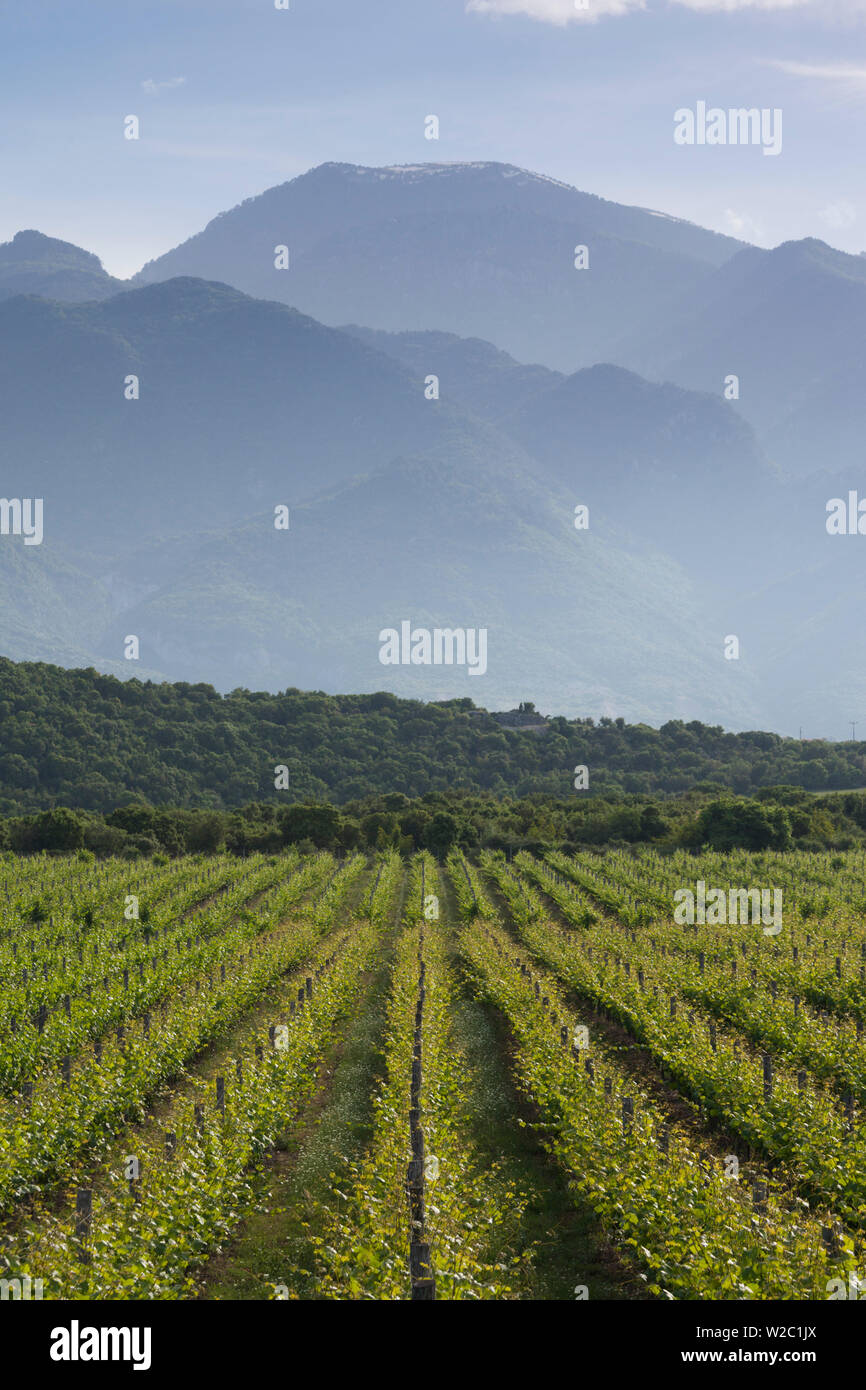 Greece, Central Macedonia Region, Dion, vineyard in the shadow of Mount Olympus - Stock Image