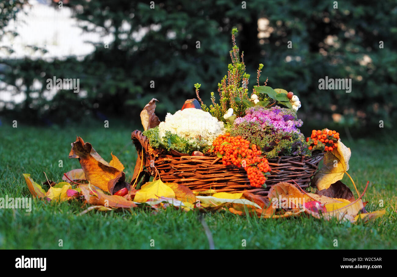 Still life in nature with basket and vegetables Stock Photo