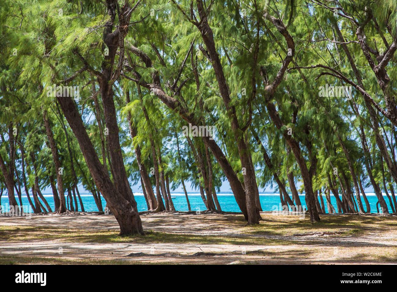 Beach and Casuarina Trees, Flacq district, East Coast, Mauritius - Stock Image