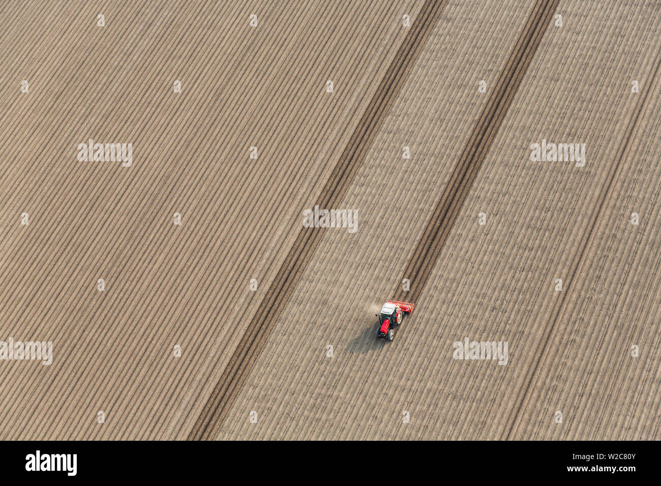 Tractor in fields, North Holland, Netherlands - Stock Image