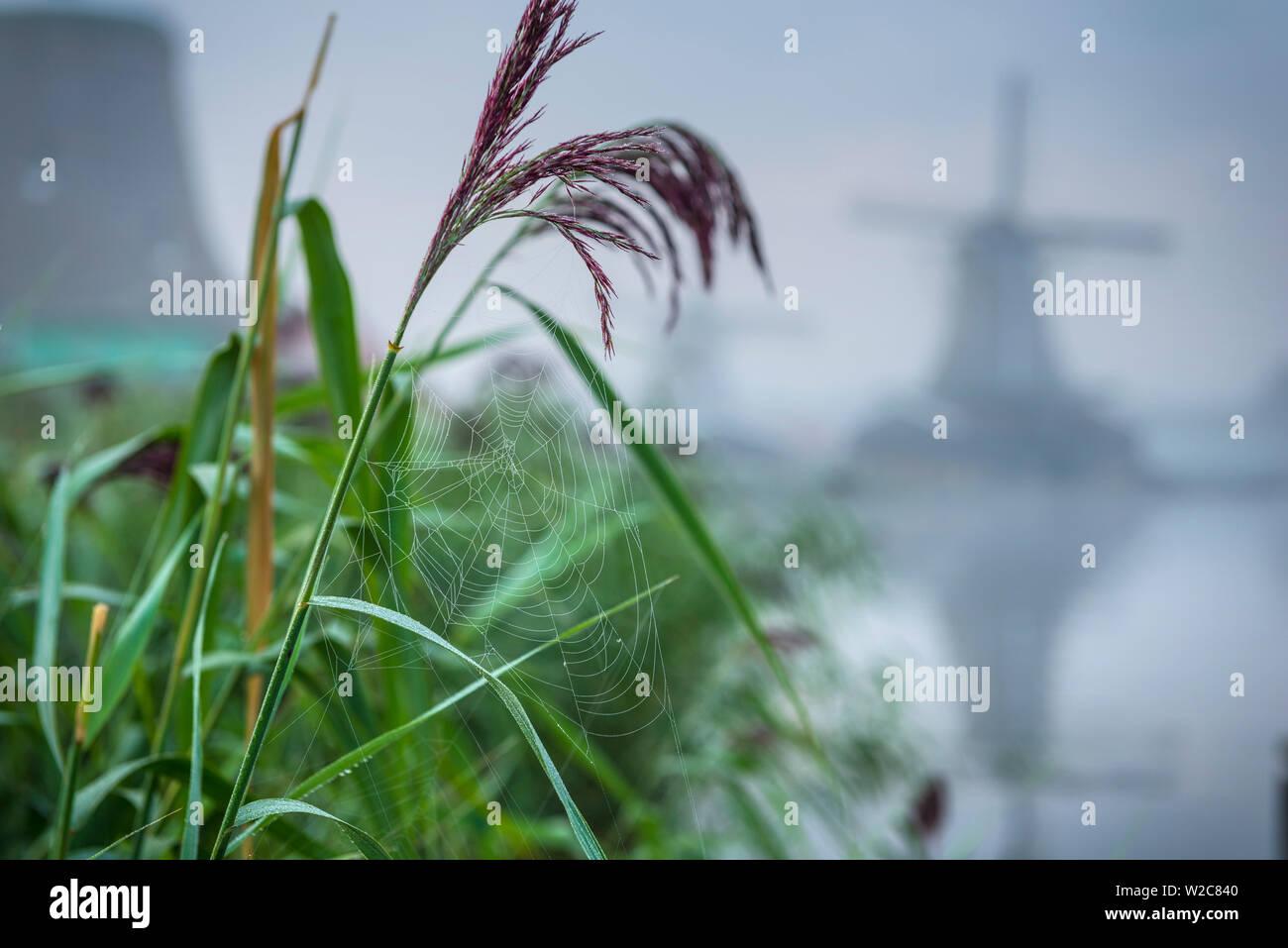 Netherlands, North Holland, Zaandam, Zaanse Schans, Windmills - Stock Image