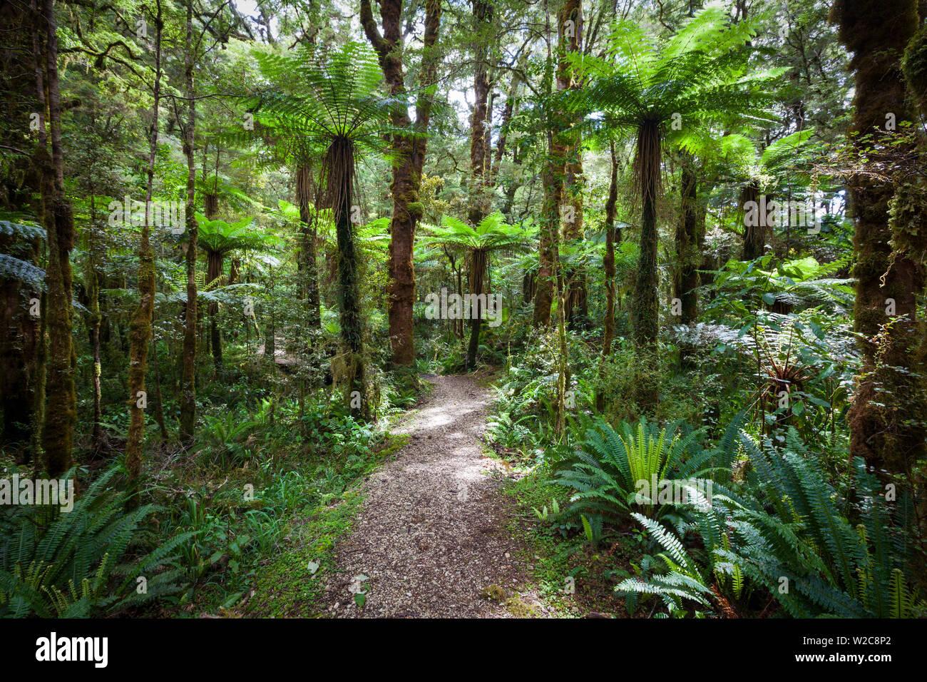 Subtropical Rainforest, Karamea, West Coast, South Island, New Zealand Stock Photo