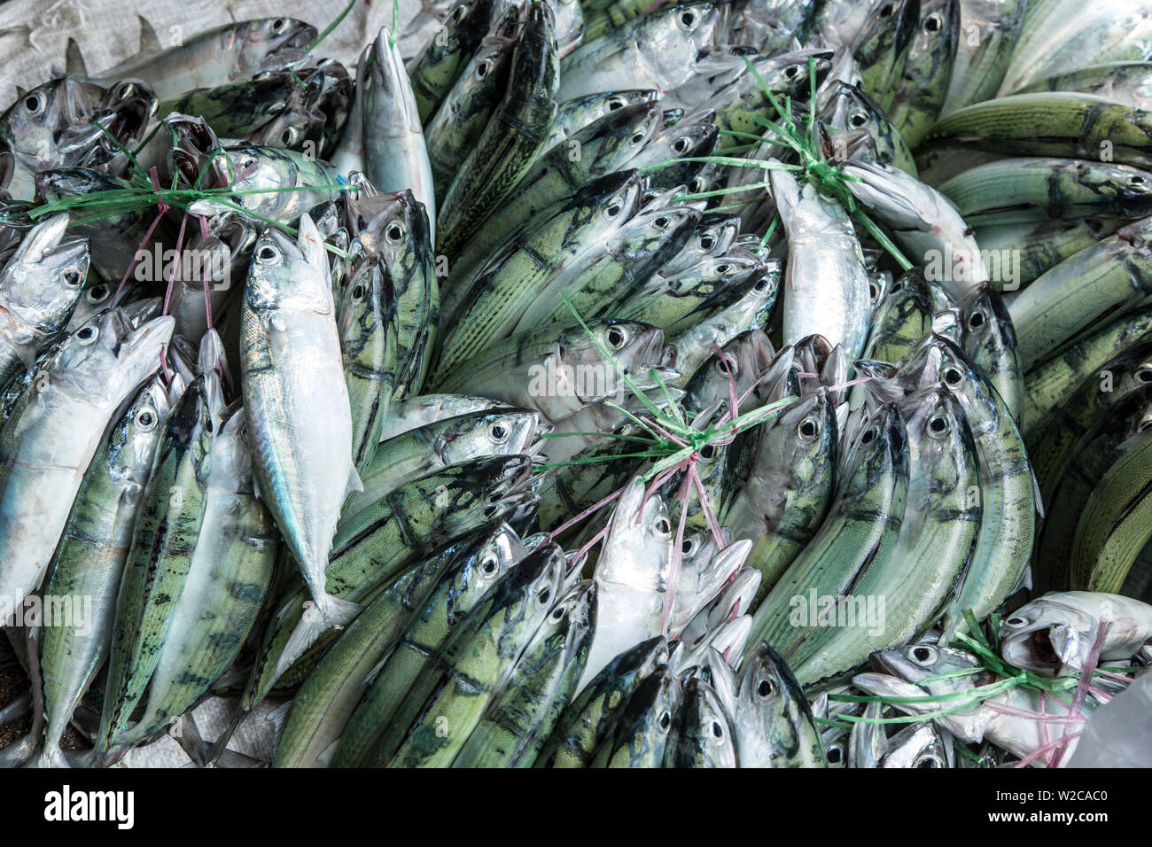 Fish displayed in the market in Victoria, Mahe, Seychelles - Stock Image