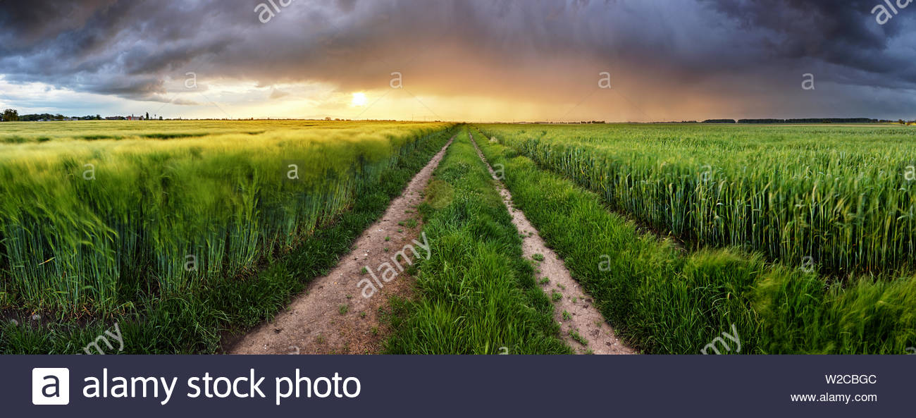 Wheat field green grass landscape sunset Stock Photo