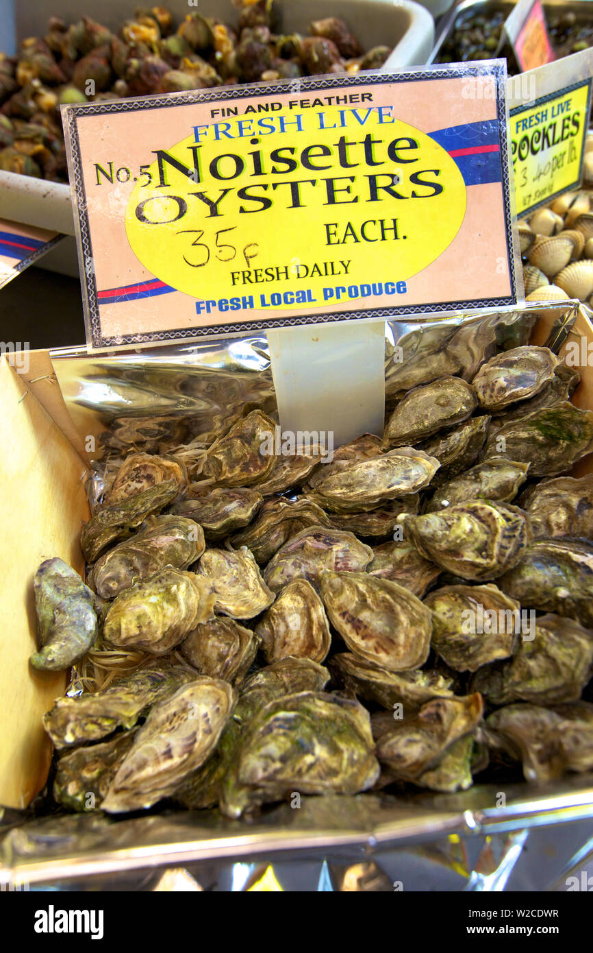 Noisette Oysters, Jersey, Channel Islands - Stock Image